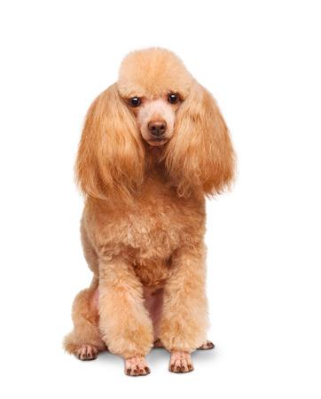 dog: Dog.