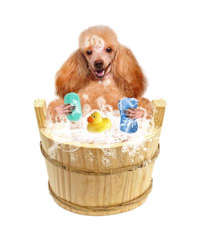 Dog washes photo