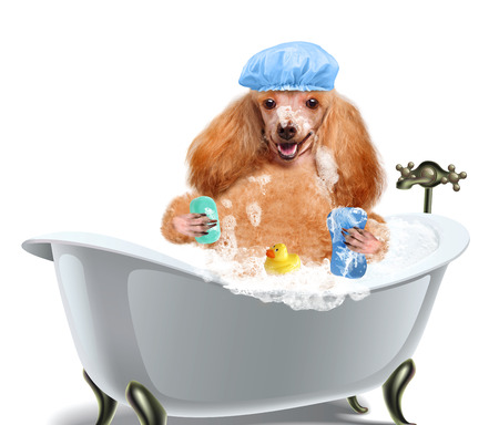 犬を洗う 写真素材