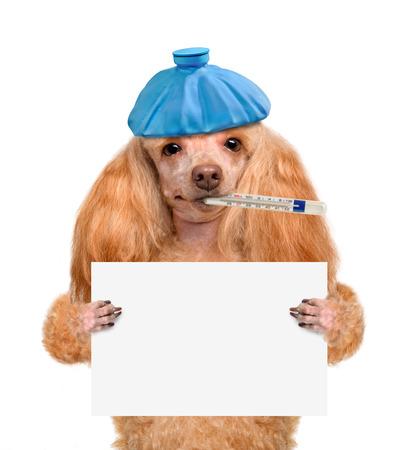 Sick dog. Фото со стока