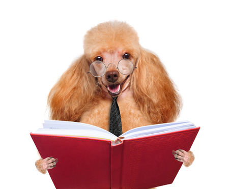 able to learn: dog reading a book Stock Photo