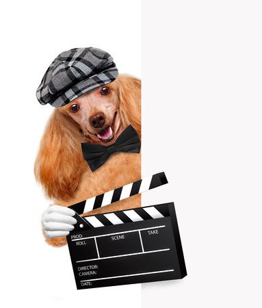 board of director: movie clapper board director dog