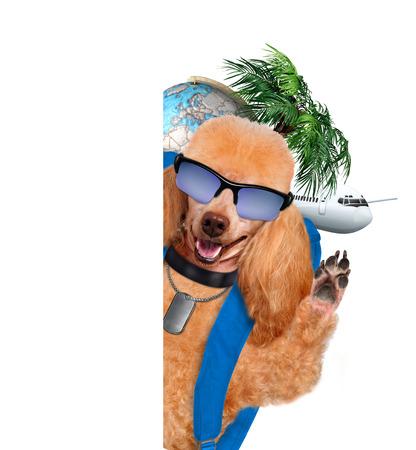 dog traveler photo