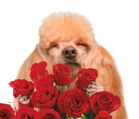 paw smart: Dog smelling flowers.