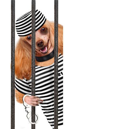 Bad dog. photo