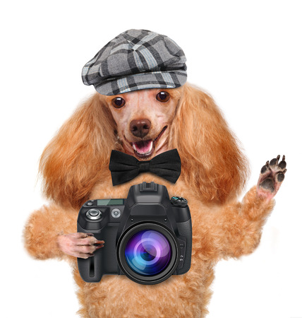 photographer dog Фото со стока