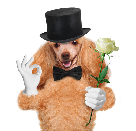 paw smart: dog with flower Stock Photo