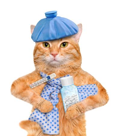 Sick cat. Standard-Bild
