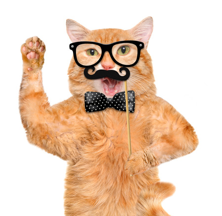funny glasses: hipster cat