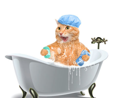 relaxen: Cat washes.