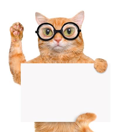 Cat in the glasses. Фото со стока