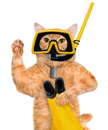 Cat diver.