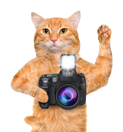 Photographer cat. Фото со стока