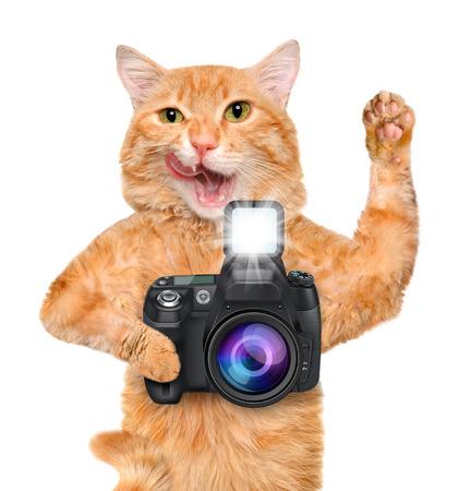 pet photography: Photographer cat. Stock Photo