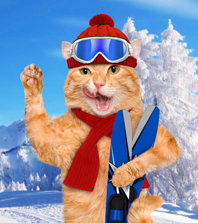 Cat with skis.