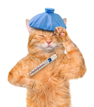 unwell: Sick cat. Stock Photo