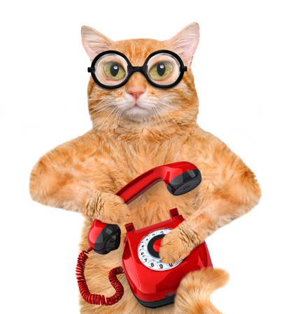 headset voice: Cat talking on the phone. Isolated on white.