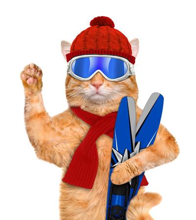 Kat met ski's. Geïsoleerd op wit.