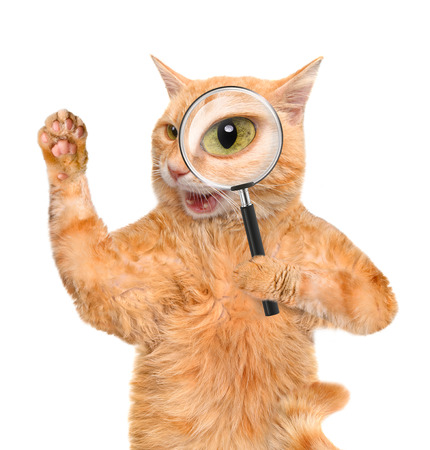 Cat with magnifying glass and searching Фото со стока