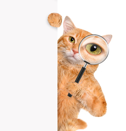 funny cats: Cat with magnifying glass and searching Stock Photo