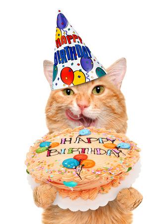 hat new year happy new year festive: Birthday cat. Stock Photo