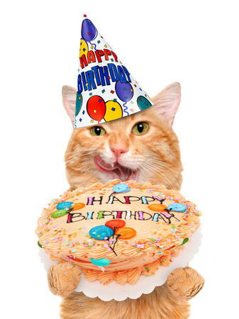 Birthday cat. Standard-Bild