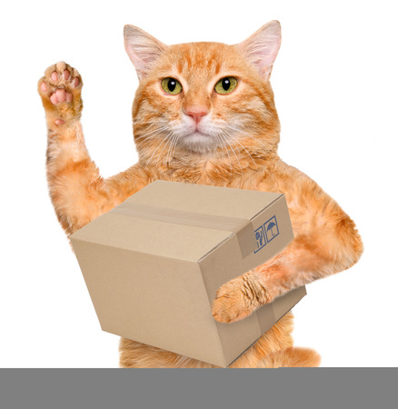 delivery box: Cat delivery post box Stock Photo
