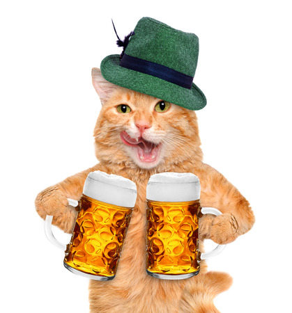 Cat with a beer mug. Isolated on white.
