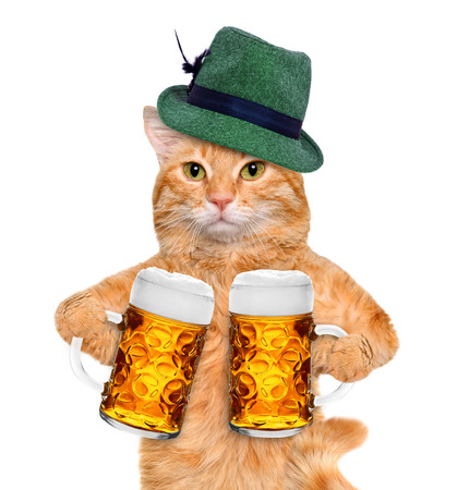 beerfest: Cat with a beer mug. Isolated on white.