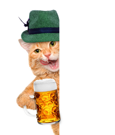 Cat with a beer mug. For white banner. Фото со стока