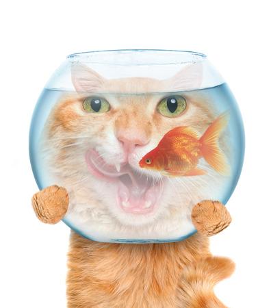 cat with an aquarium