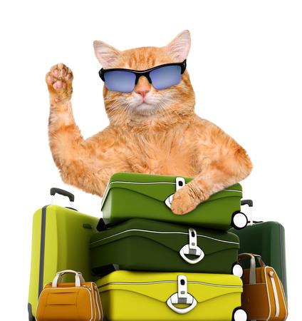 Cat traveler.