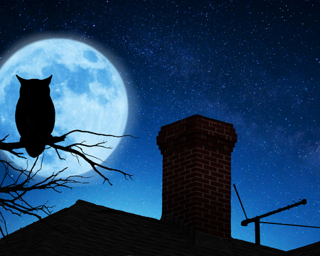 Owl on the branch 免版税图像
