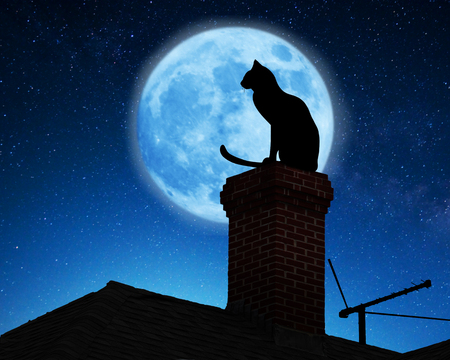 black cat: Cat on a roof. Stock Photo