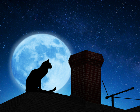 animal pussy: Cat on a roof. Stock Photo