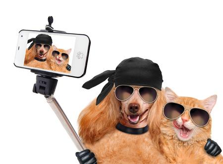 dog days: perro con el gato de tomar una selfie junto con un smartphone Foto de archivo