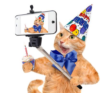 joyeux anniversaire: Anniversaire chat prenant un selfie avec un smartphone. Banque d'images