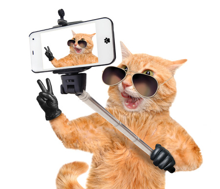Cat with peace fingers in black leather taking a selfie together with a smartphone. Archivio Fotografico