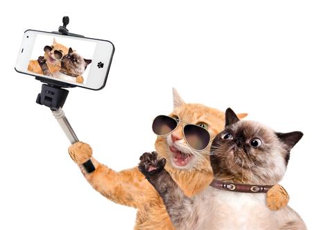 Kočky užívající si selfie s smartphone. Na bílém.