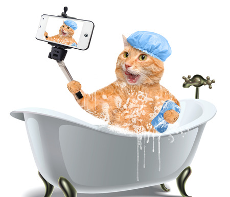 Cat taking a selfie with a smartphone. Cat washes. Stockfoto