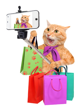 animals and pets: Cat taking a selfie with a smartphone. Cat with shopping bags.