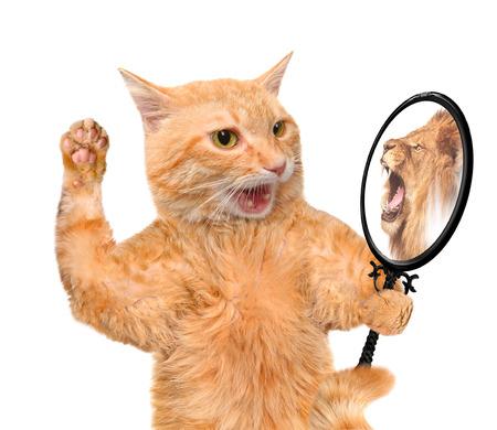 koty: Cat patrząc w lustro i widząc odbicie lwa. Zdjęcie Seryjne