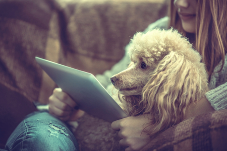 Young girl is resting with a dog on the armchair at home and using tablet.