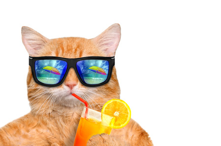 Cat wearing sunglasses relaxing in the sea background. Isolated on white. Isolated on white. Standard-Bild