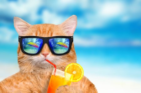 Cat wearing sunglasses relaxing in the sea background