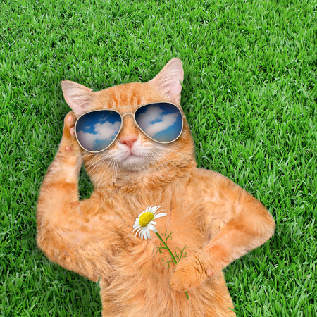 Cat wearing sunglasses relaxing in the grass. Фото со стока