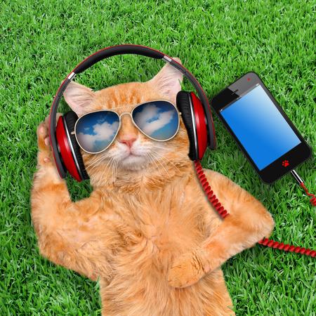 猫ヘッドフォン サングラス芝生でリラックス。 写真素材
