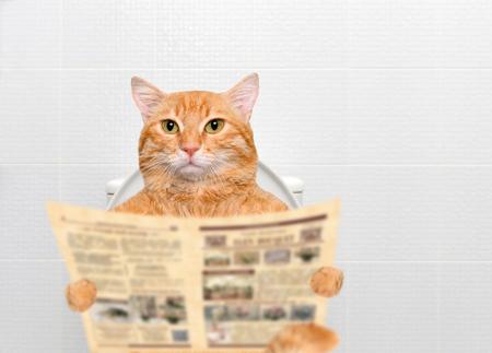 トイレで新聞を読みながら猫。