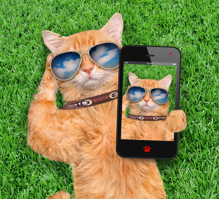 Red cat taking a selfie. Imagens