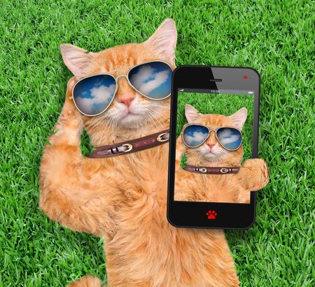 Red cat taking a selfie. Stockfoto